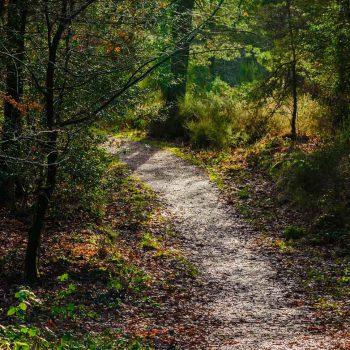 Broceliande-path