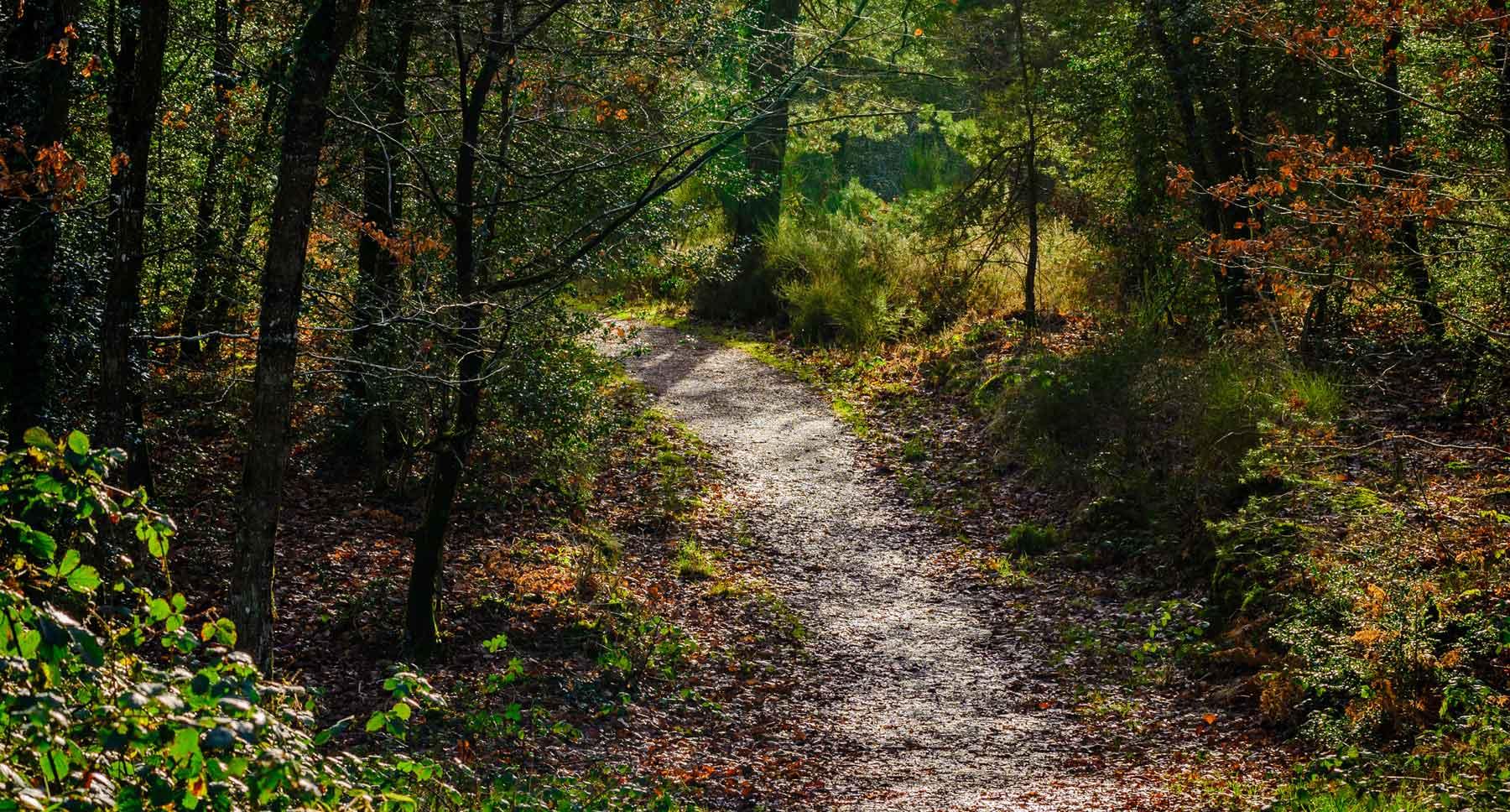 Take a Stroll in King Arthur's Forest of Brocéliande
