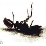 The Carpenter (ant)