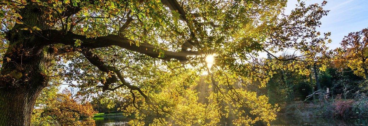 Are Trees the Key to Clean Energy?