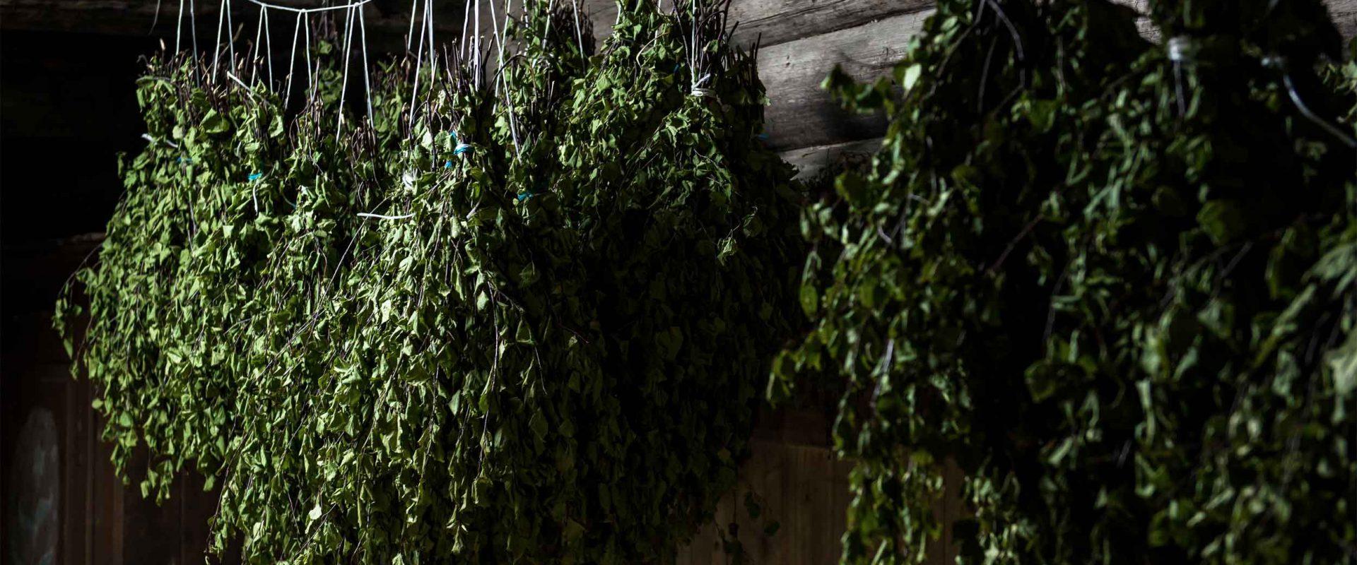 Sauna birch whisks